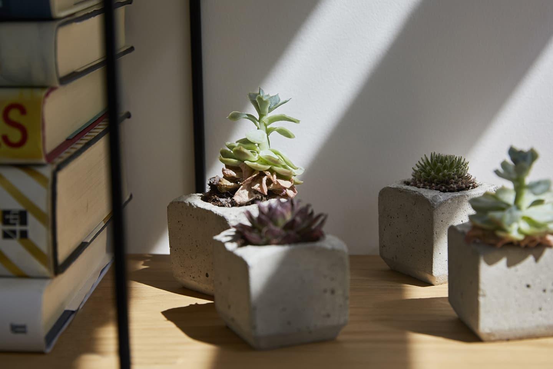 light landing on plants