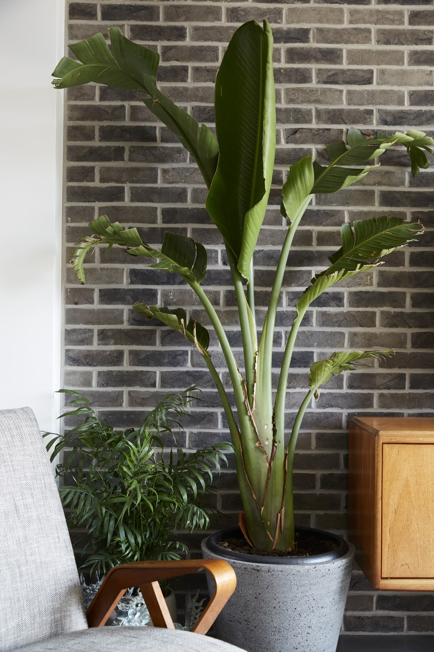 plant in front of brick wall