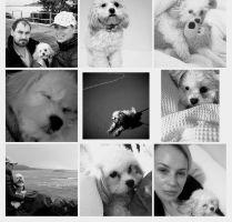 Veronika S - Profile for Pet Hosting in Australia