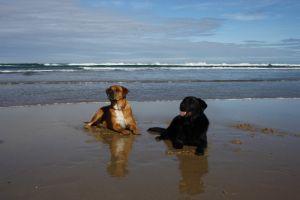 Samantha L - Profile for Pet Hosting in Australia