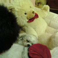 VIV H - Profile for Pet Hosting in Australia