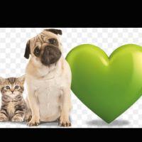 Sakeena H - Profile for Pet Hosting in Australia