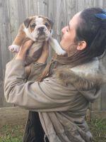 Julia R - Profile for Pet Hosting in Australia