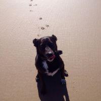 Chelaine B - Profile for Pet Hosting in Australia