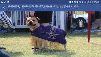 Michelle J - Profile for Pet Hosting in Australia