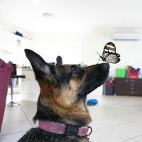 Erin J - Profile for Pet Hosting in Australia