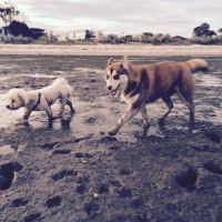 It's a pooch life A - Profile for Pet Hosting in Australia