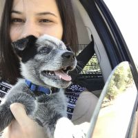 Julie K - Profile for Pet Hosting in Australia
