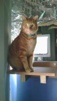 Gabriel M - Profile for Pet Hosting in Australia