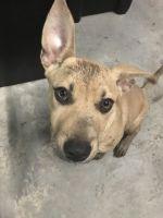 Lynn F - Profile for Pet Hosting in Australia