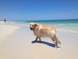 Linsey W - Profile for Pet Hosting in Australia
