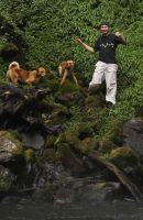 Daniel C - Profile for Pet Hosting in Australia