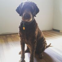 Melora W - Profile for Pet Hosting in Australia