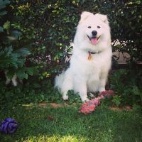 Sophie O - Profile for Pet Hosting in Australia