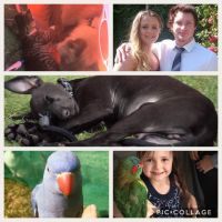Courtney D - Profile for Pet Hosting in Australia
