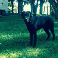 Bex P - Profile for Pet Hosting in Australia