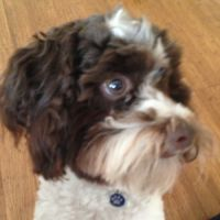 lisa m - Profile for Pet Hosting in Australia