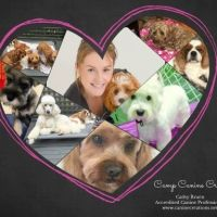 Cathy B - Profile for Pet Hosting in Australia