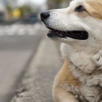 Ethan E - Profile for Pet Hosting in Australia