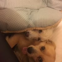 Pooja H - Profile for Pet Hosting in Australia
