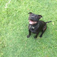 Jesse M - Profile for Pet Hosting in Australia