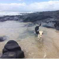 Tilda C - Profile for Pet Hosting in Australia