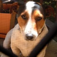 Carol D - Profile for Pet Hosting in Australia