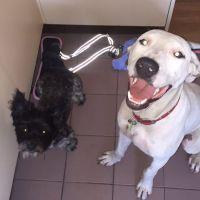 Jessica W - Profile for Pet Hosting in Australia