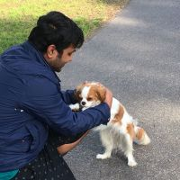 Abhishek J - Profile for Pet Hosting in Australia