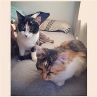 Aimee C - Profile for Pet Hosting in Australia