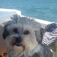 Sally W - Profile for Pet Hosting in Australia