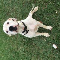 Morgan H - Profile for Pet Hosting in Australia
