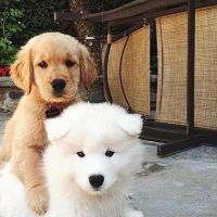 Charlotte and Jo P - Profile for Pet Hosting in Australia
