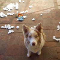 Colette S - Profile for Pet Hosting in Australia