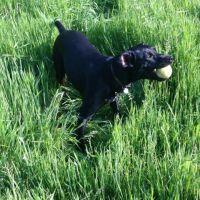 Natasha H - Profile for Pet Hosting in Australia