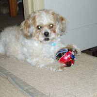 Chris W - Profile for Pet Hosting in Australia