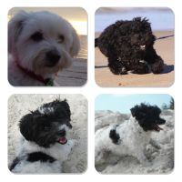 Kyo P - Profile for Pet Hosting in Australia