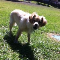 Tara M - Profile for Pet Hosting in Australia