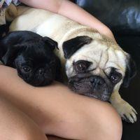 Khar-lee A - Profile for Pet Hosting in Australia