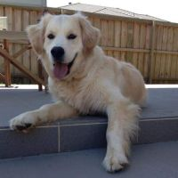 Cheyenne B - Profile for Pet Hosting in Australia
