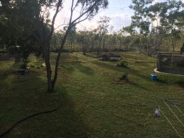 Steliana E - Profile for Pet Hosting in Australia