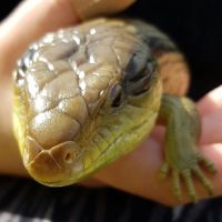 Emily C - Profile for Pet Hosting in Australia