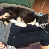 Megan H - Profile for Pet Hosting in Australia