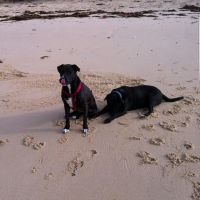 Trevor H - Profile for Pet Hosting in Australia