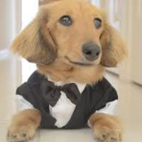 Susana C - Profile for Pet Hosting in Australia