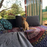 Katy W - Profile for Pet Hosting in Australia