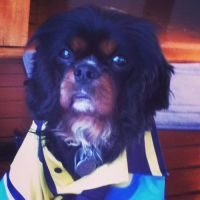 Erin p - Profile for Pet Hosting in Australia