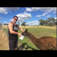 Adrian M - Profile for Pet Hosting in Australia