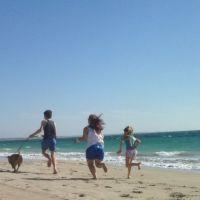 Andrew N - Profile for Pet Hosting in Australia
