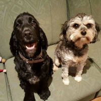 Kerry H - Profile for Pet Hosting in Australia